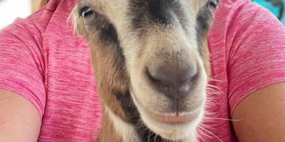 Savannah Yoga with Little Goats - 9:30
