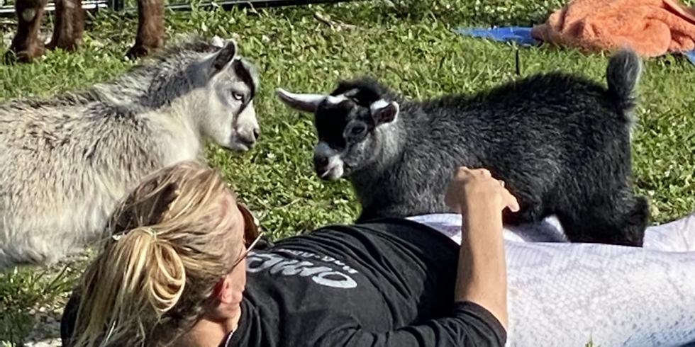 Sunset Yoga with Little Goats - Broward - 4:00