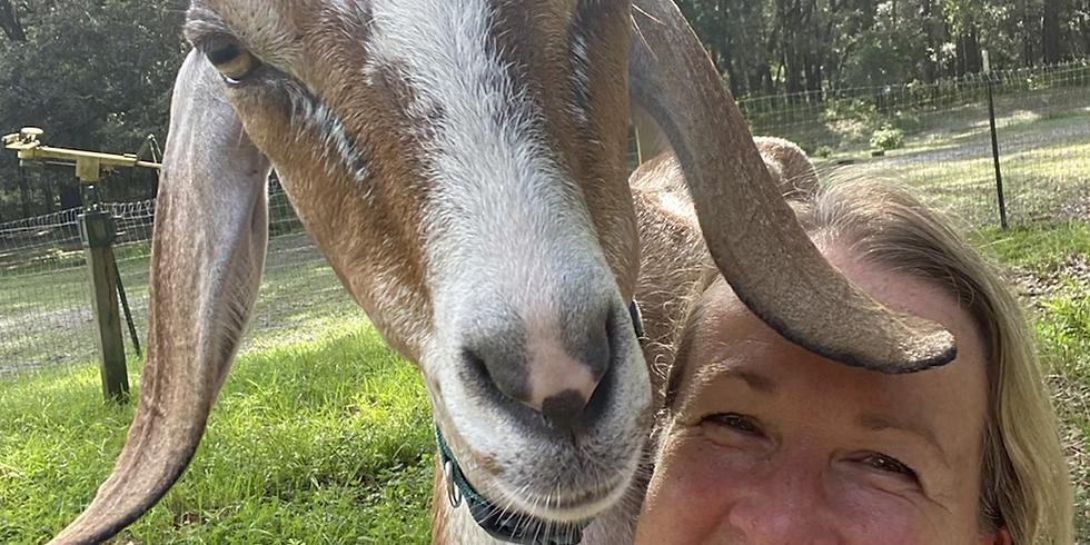 Broward Yoga with Little Goats - 10:30