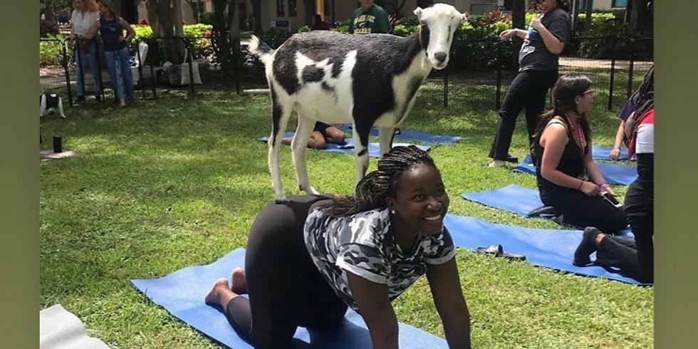 Broward - Yoga with Little Goats