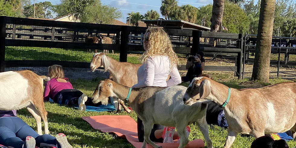 Savannah Yoga with Little Goats -  Weather Delay