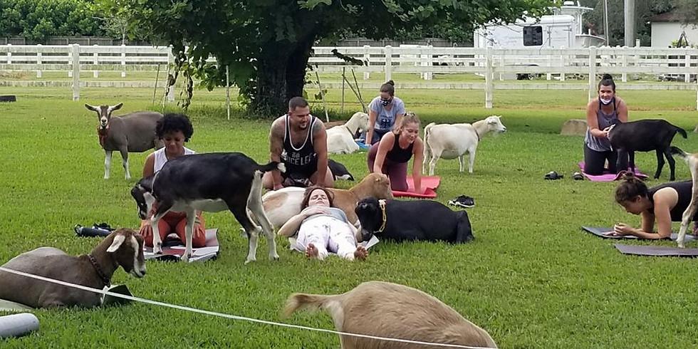Yoga with Little Goats - Broward - 9:00 am