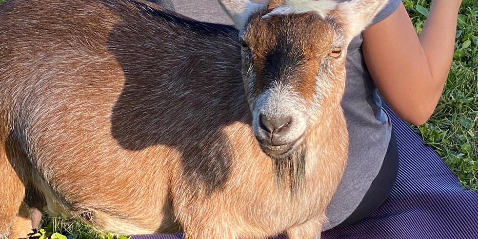 Gainesville - Yoga with Little Goats - WEATHER POSTPONED
