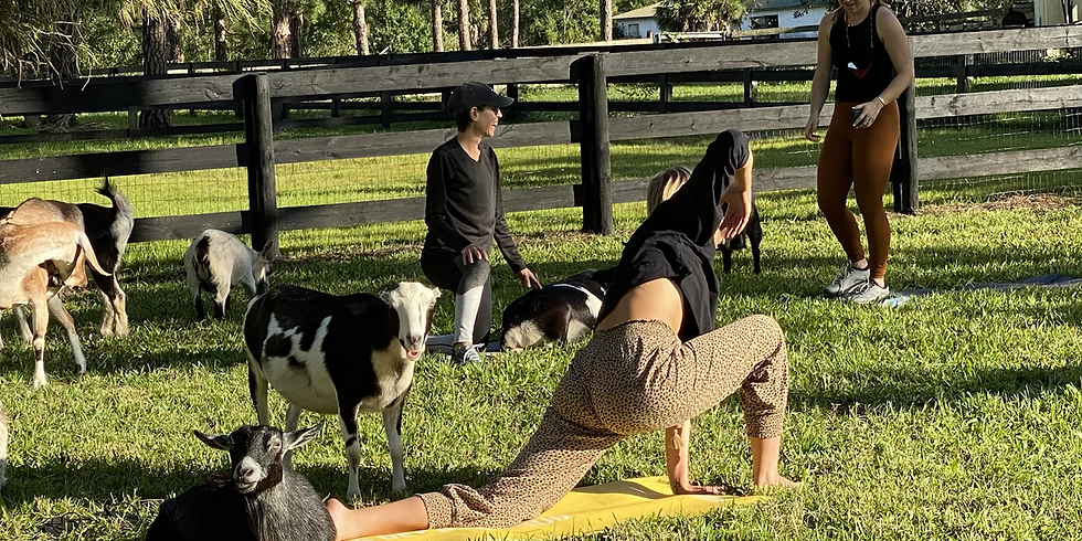 Broward - Yoga with Little Goats - 9:00 SOLD OUT