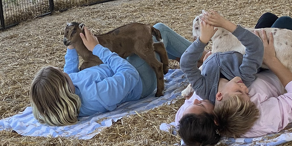 High Springs - Yoga with Little Goats  - 11:00 WEATHER POSTPONED