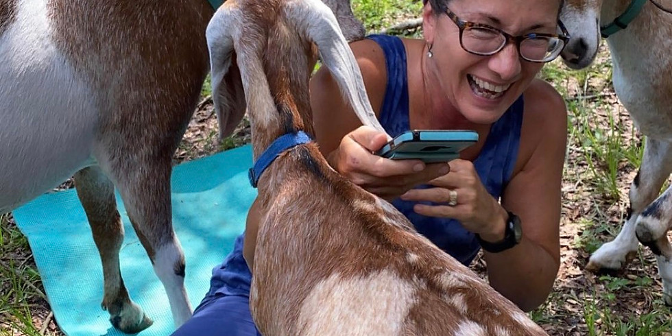 Yoga with Little Goats - Gainesville