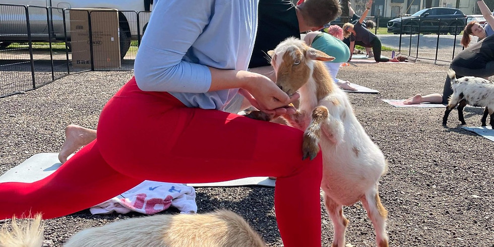 Savannah - Yoga with Little Goats - 1:00 SOLD OUT