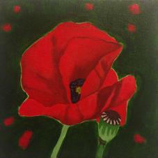Unfolding Poppy