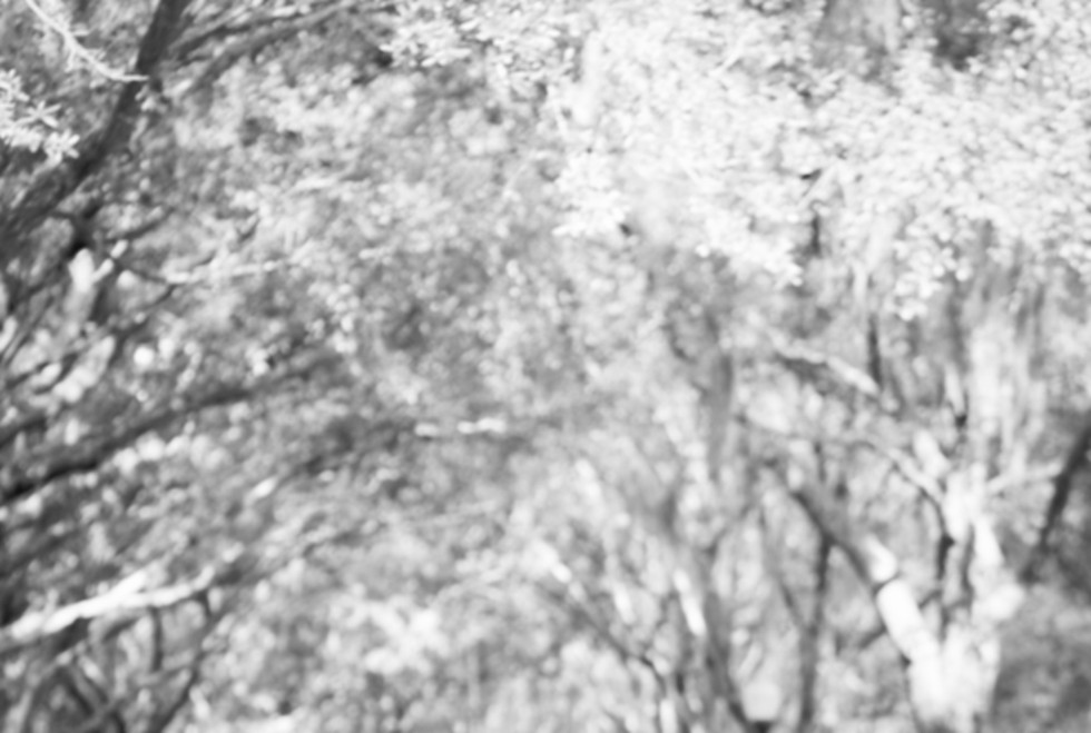 black and white foliage