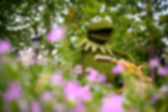 Personal Project | EPCOT Flower & Garden Festival creative theme park photography