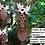 Thumbnail: Cuillère d'exeption ! Deux colombes l'une contre l'autre.