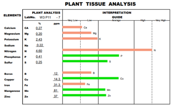 tissue control wheat grass.png