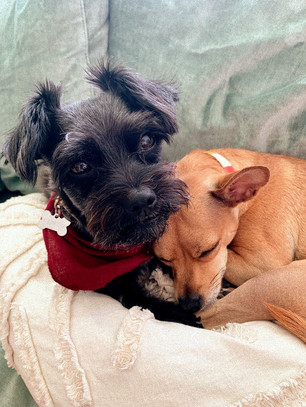 What We Can Learn About Friendship From Two Dogs?