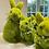 Thumbnail: Small Rabbit