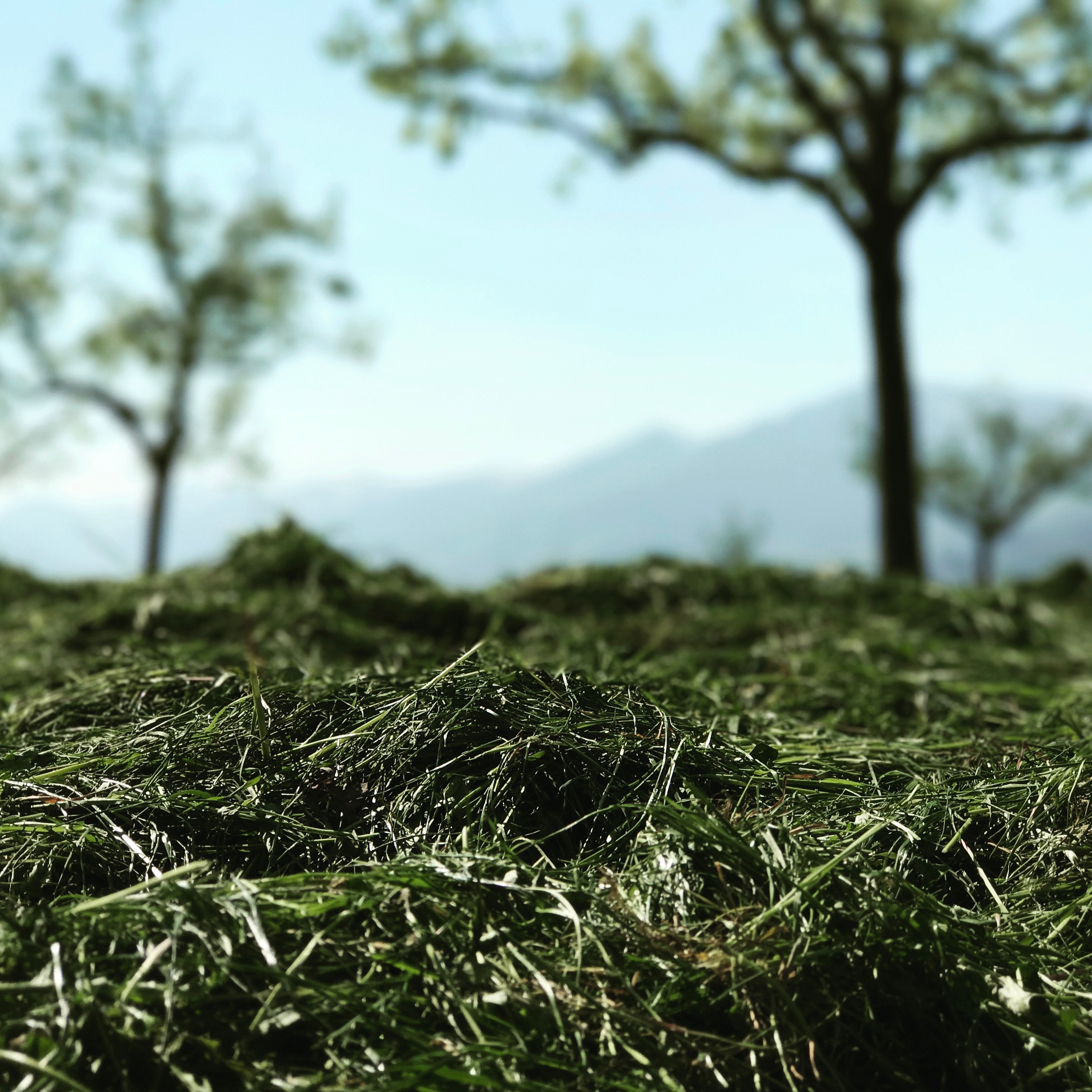 gräser fallen