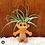 Thumbnail: Plantroll