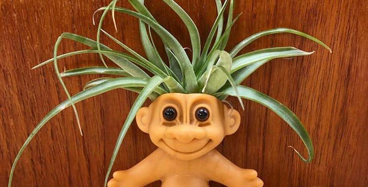 Plantroll