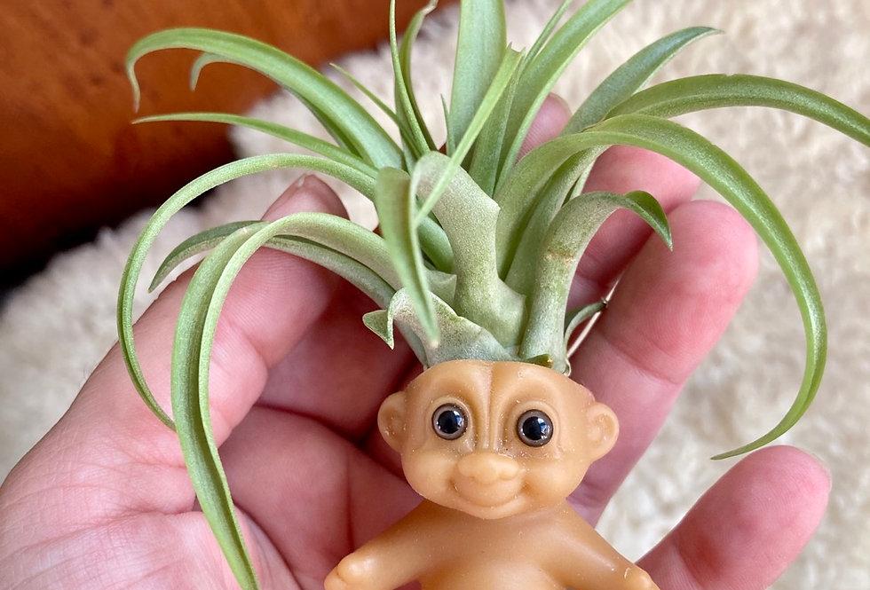 BB Plantroll