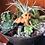 Thumbnail: Crawling BB Plantroll