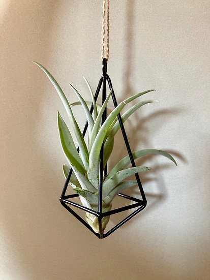 Geometric Air Plant Dangle