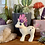Thumbnail: Baby Glory - My Crystal Pony