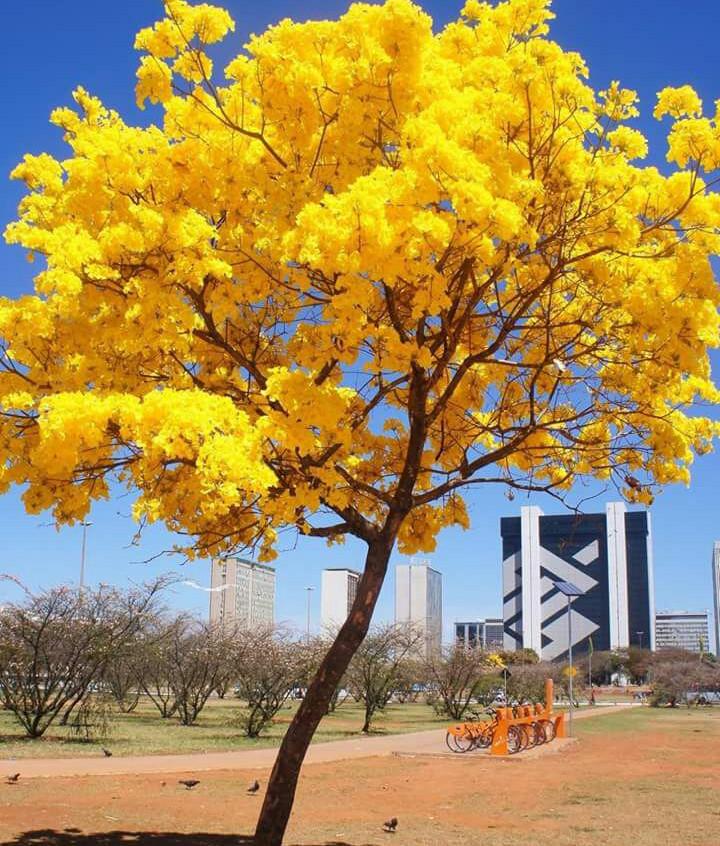 Galeria Brasília