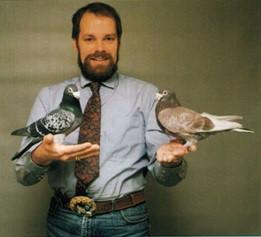 Que regardons nous quand nous achetons des pigeons ??