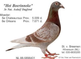 Un petit colombier, quelques pigeons. Elevage en ligne?