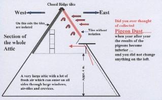 L'importance d'un pigeonnier sain (conclusion)