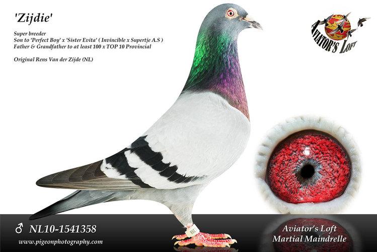 NL10-1541358_main.jpg