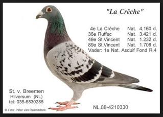 Le Caractère et L'Intelligence font le pigeon de classe