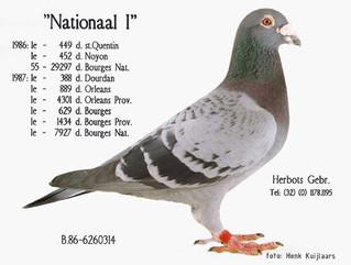 Un pigeon très intéressant...