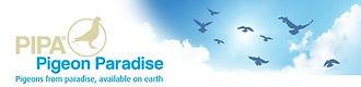 Pipa Paradise - Actualités Internationales - Ventes en ligne