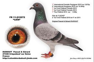 Le Type de pigeon adapté pour un séjour long dans le panier