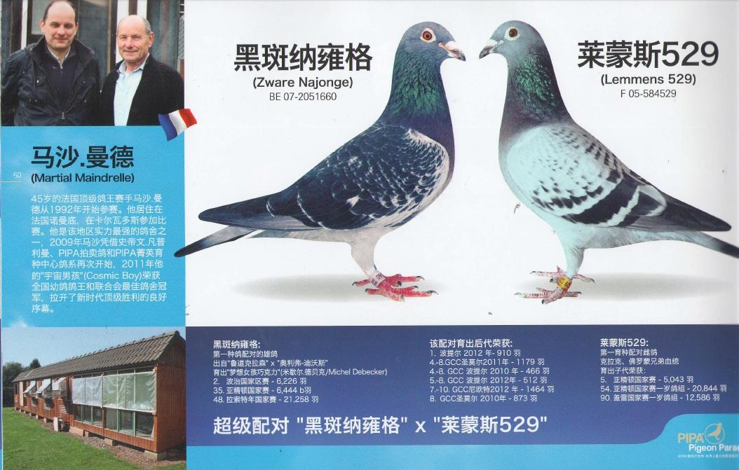 PEC+chinois