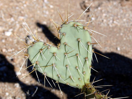 Downward Ascent 7: Prickly Peace