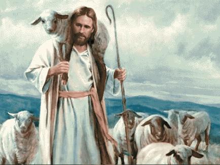 Shepherdless?