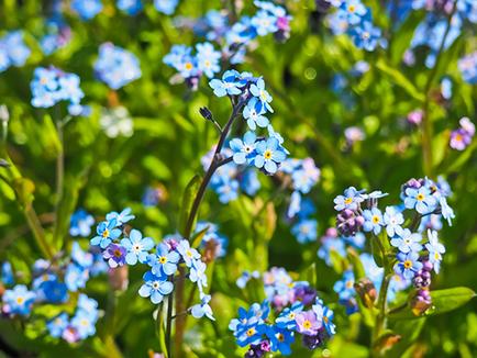 Polish Spring