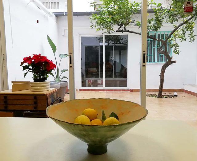 Los limones del limonero han encontrado