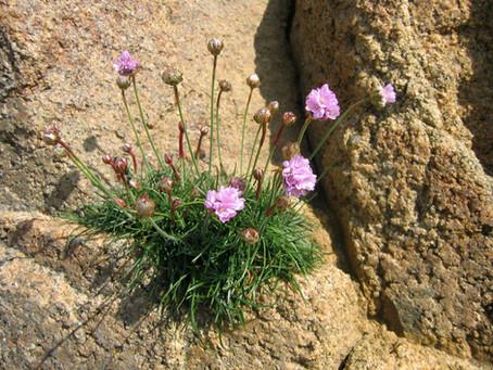 Habitat et flore dans la réserve naturelle de Scàndula.