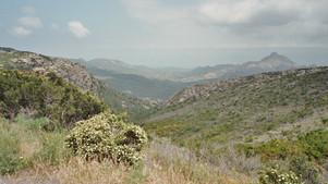 """Le maquis """"Corse"""" : un jardin inépuisable de couleurs et de senteurs"""