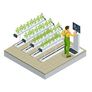 cultivation .jpg