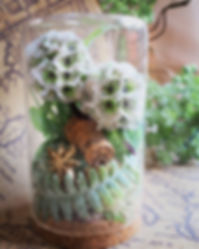 机の上の植物園