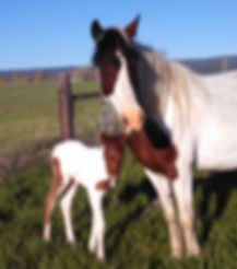 Imogene19filly.jpg