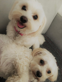 Sophie and Fifi