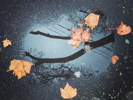 Autumn weaves a magical spell