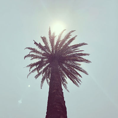 Web Palm Tree.jpg