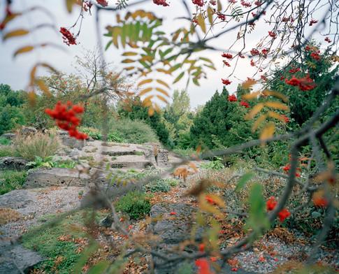 Botanical- Berry