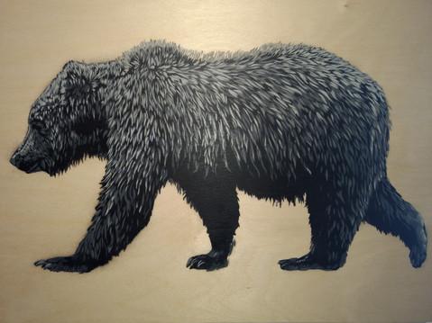 Grey Grizz