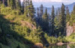 conifer-daylight-evergreen-23381.jpg